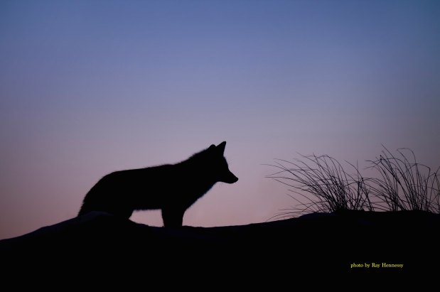 There is a wolf nipping at yoursoul